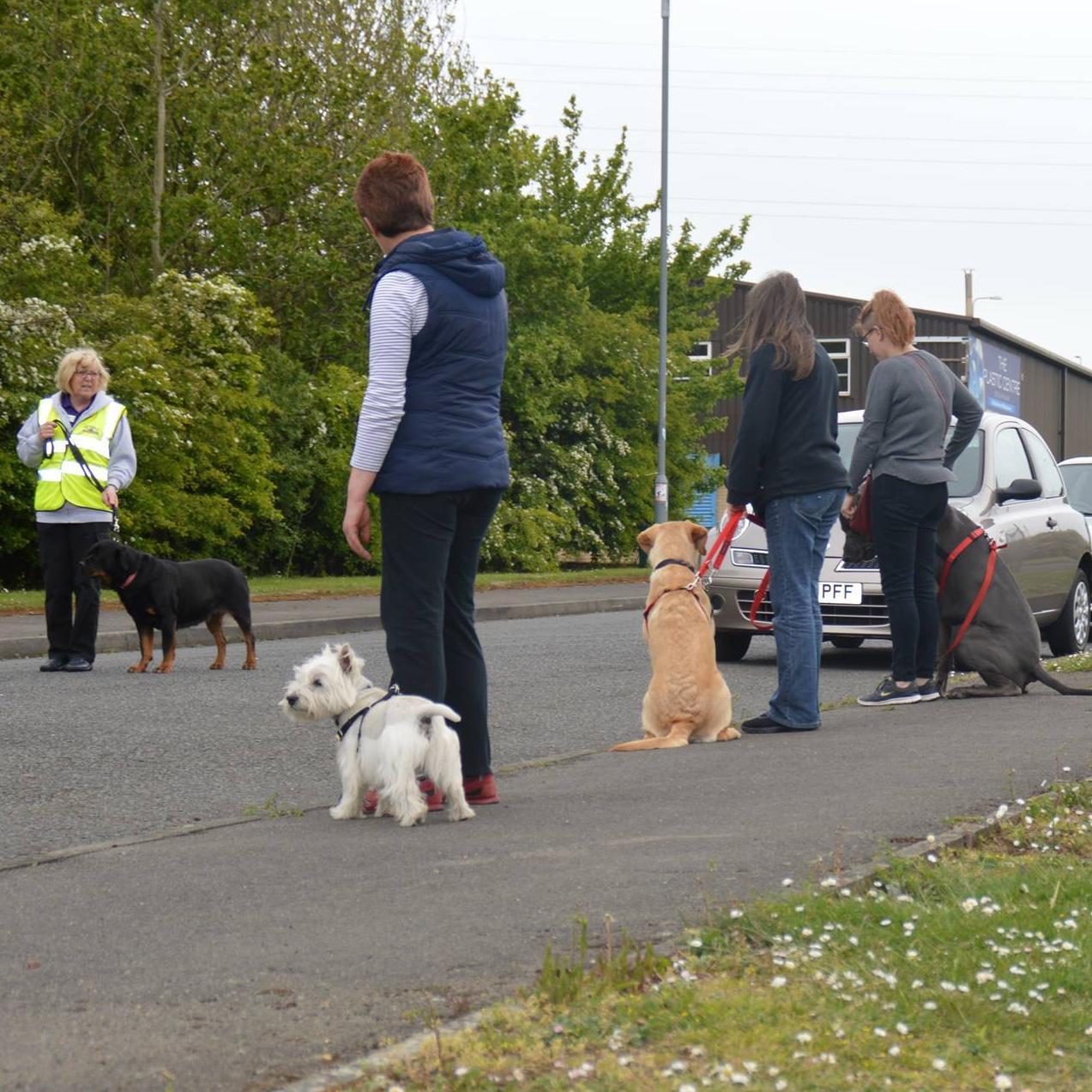 Dog Training Washington Tyne And Wear