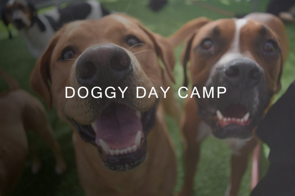 Is Doggy Day Camp Good For Dogs