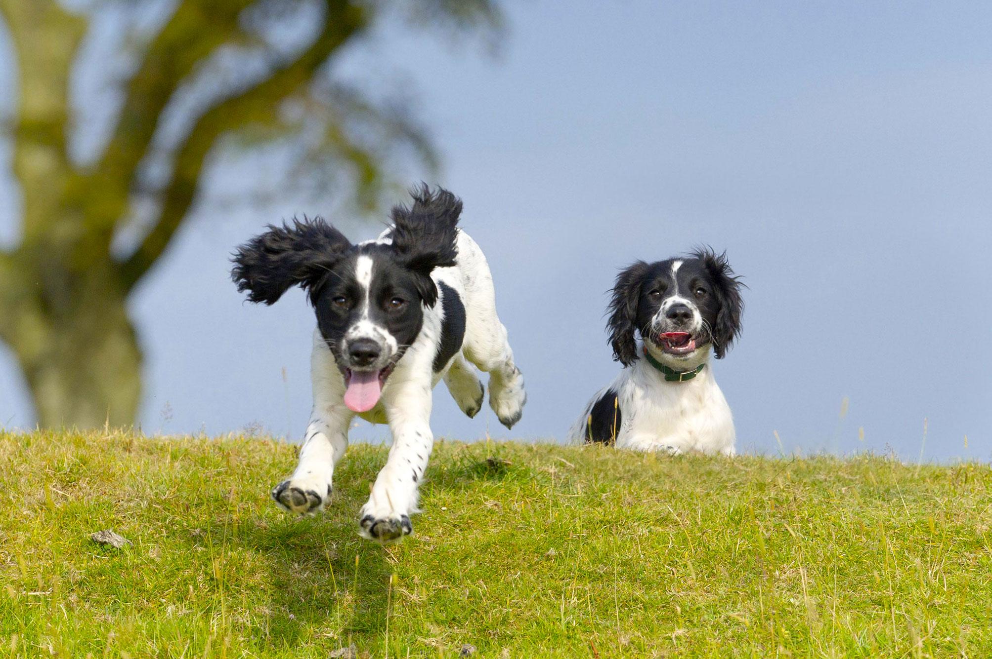 FitBark_Dogs_Running
